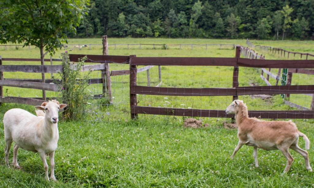Pay It Forward Friday: Catskill Animal Sanctuary - Sweet Potato Soul