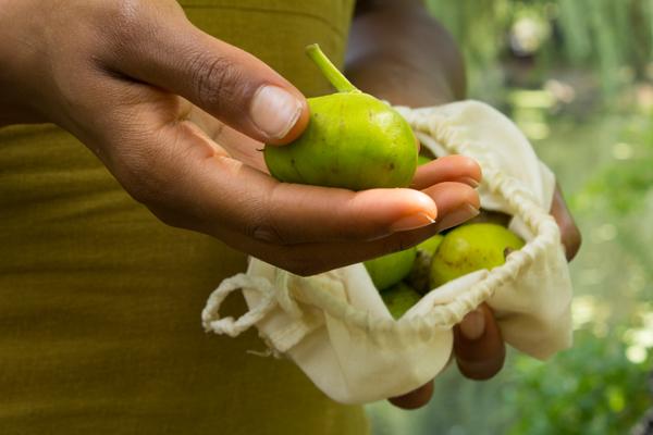 Monticello Marseilles Figs